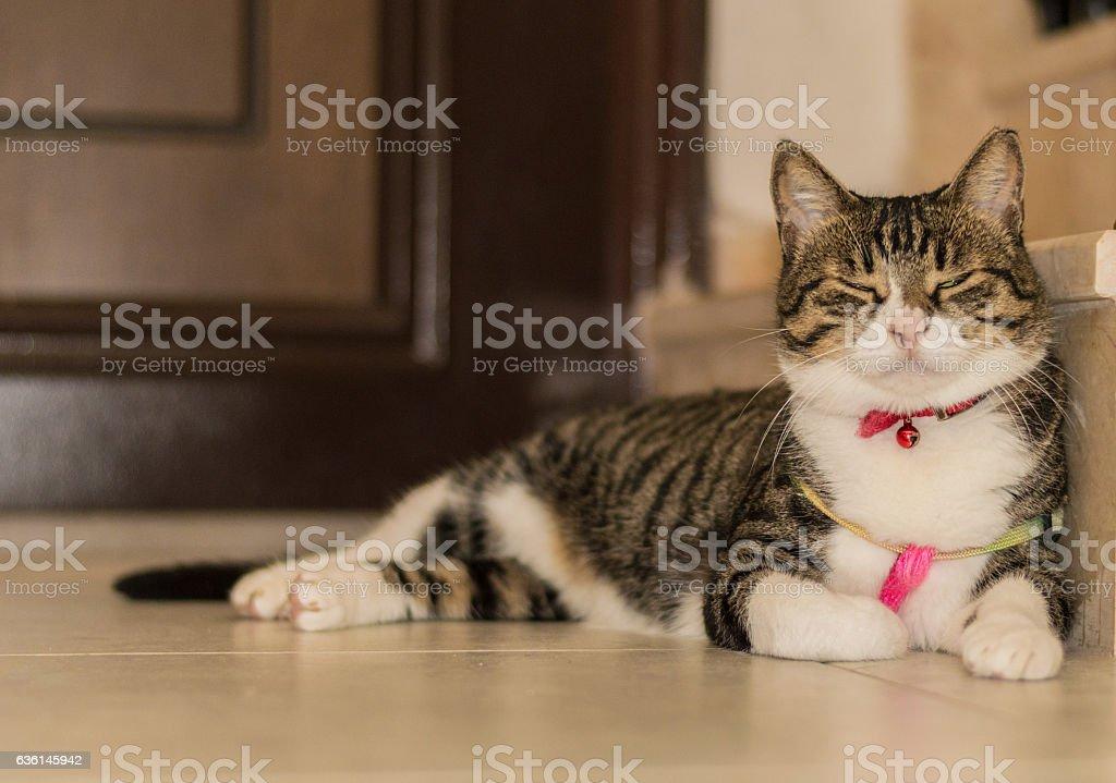 Tabby cat sleeping on the floor near the door stock photo