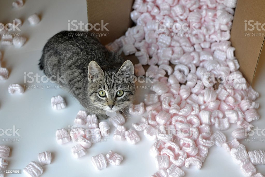 Tabby kitten in spilled box stock photo