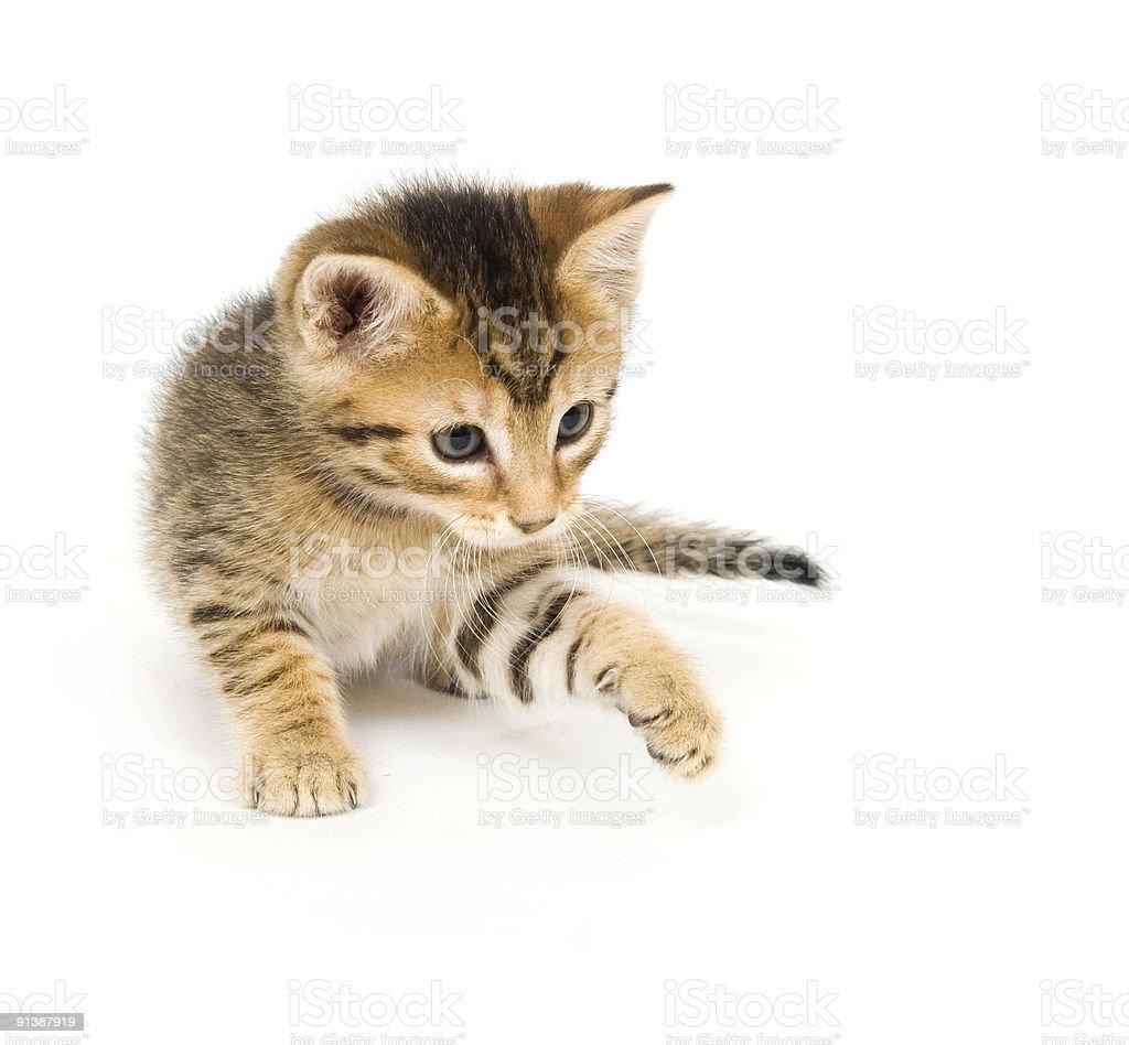 tabby kitten playing royalty-free stock photo