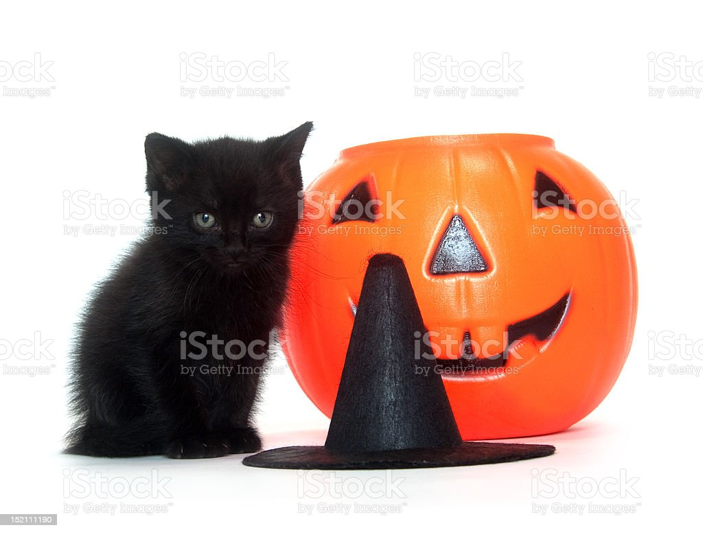 Tabby kitten with Halloween decorations royalty-free stock photo