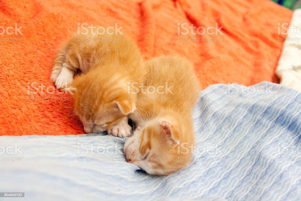 tabby orange kitten sleeping stock photo