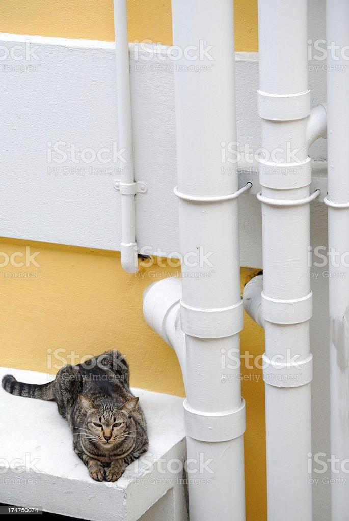 Tabby stock photo