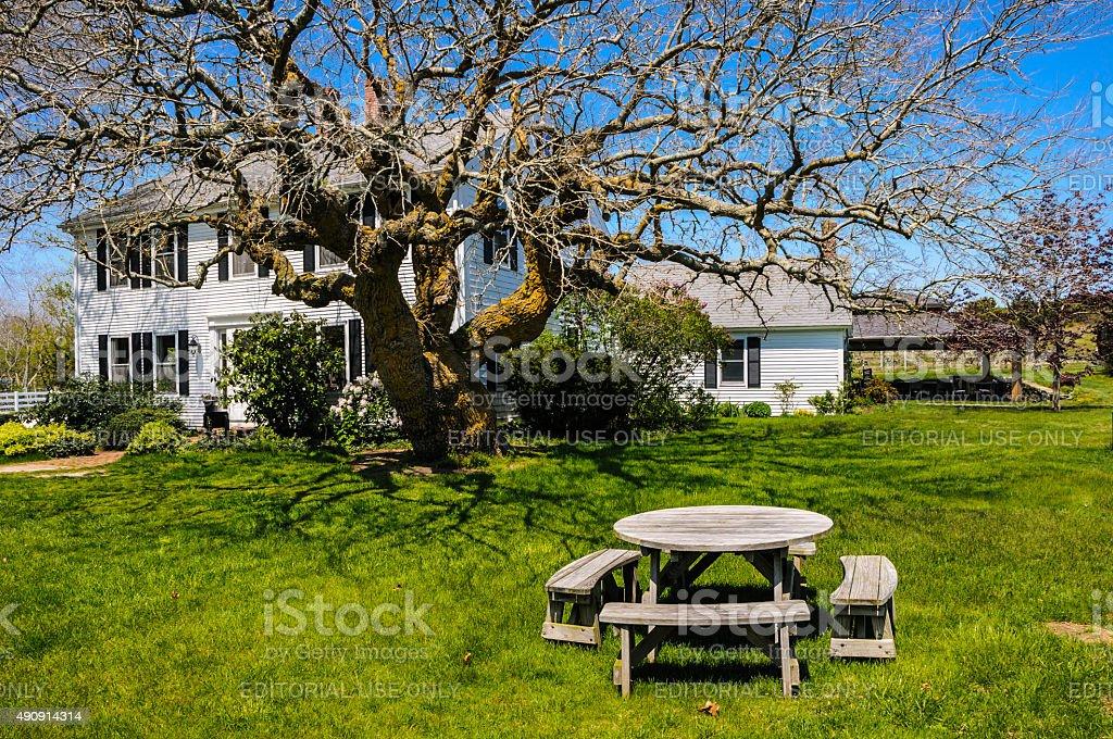 Table Beneath the Ancient Tree stock photo