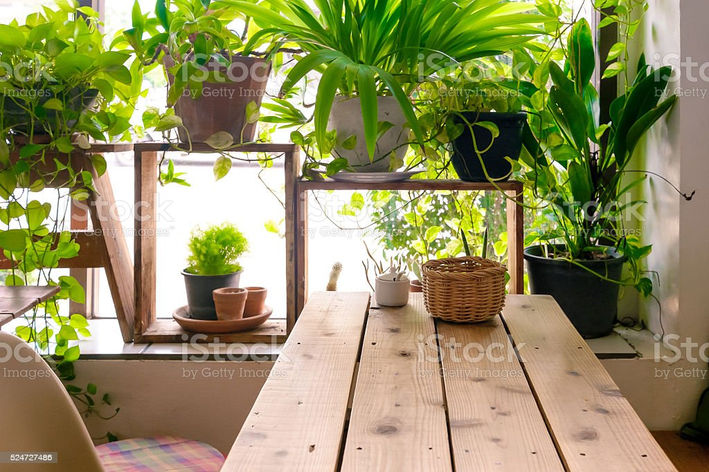Table side the window and plants pot stock photo