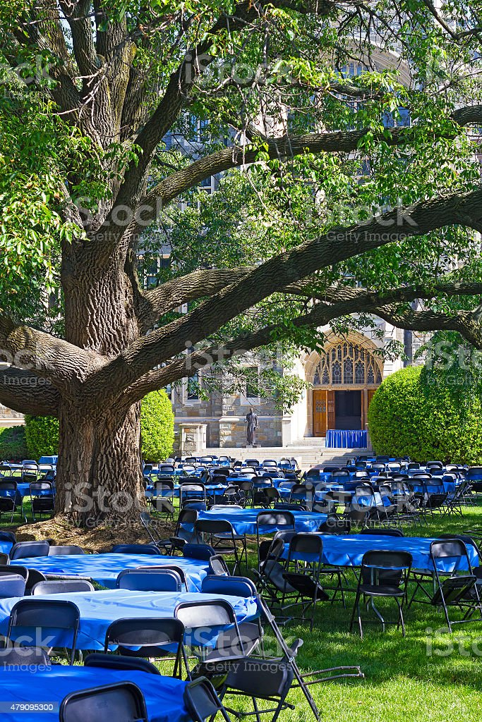Tables and chairs on a lawn under old tree. stock photo