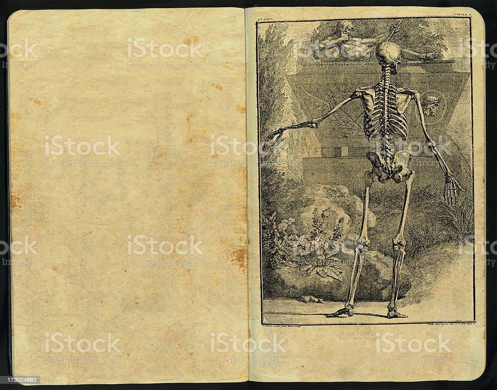 Tabula sceleti Sketch Pad royalty-free stock photo
