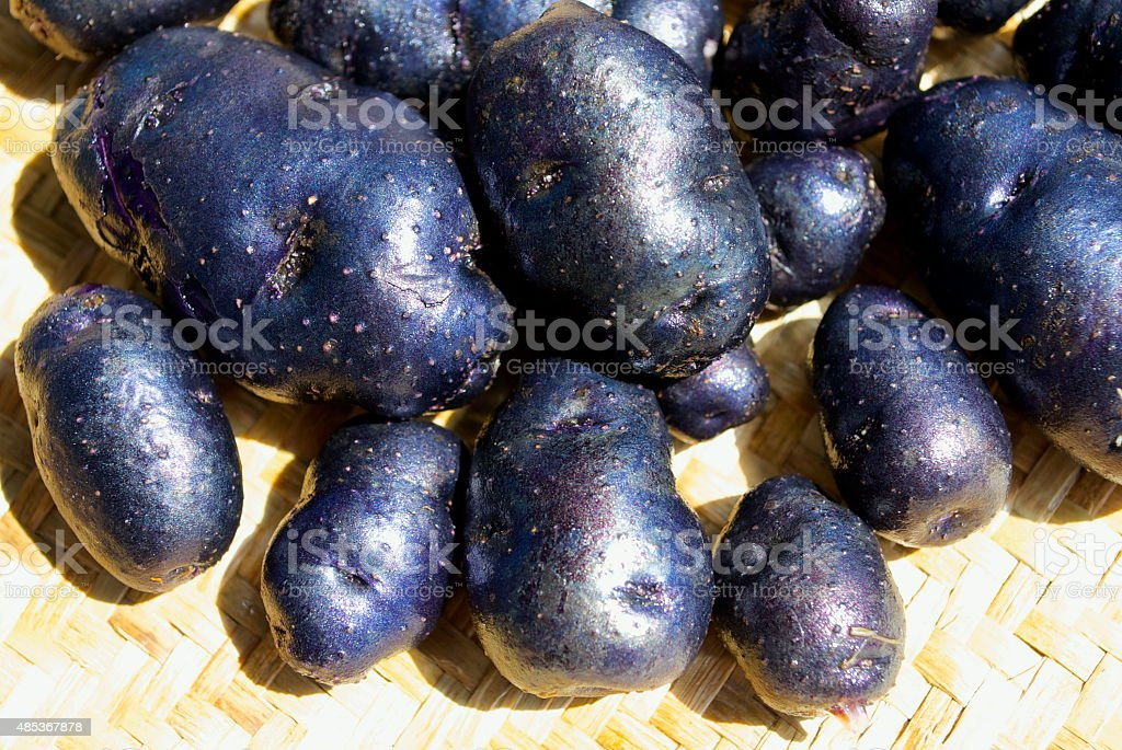 Taewa or Riwai, Maori Potatoes - Urenika Variety stock photo