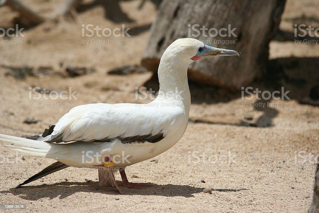 tagged bird stock photo