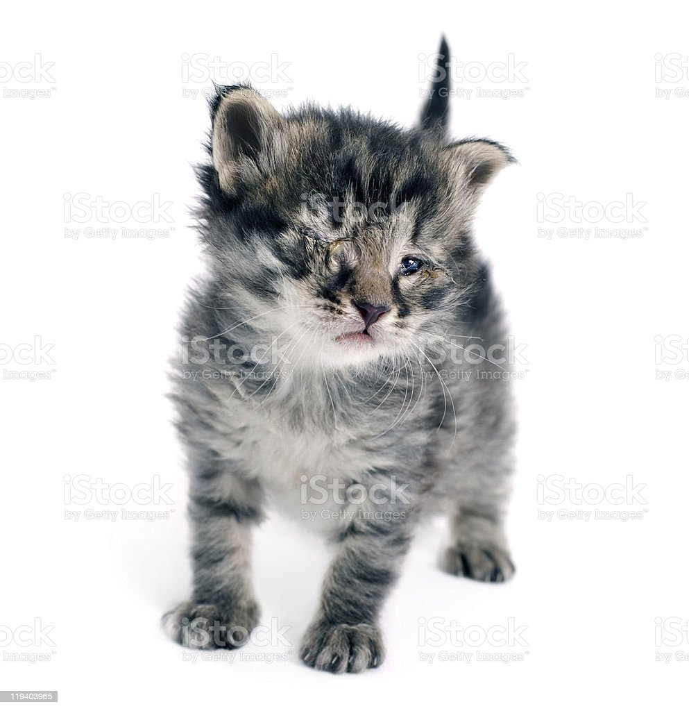 Taggy Cute Kitten's One of Eye's Closed and infected stock photo