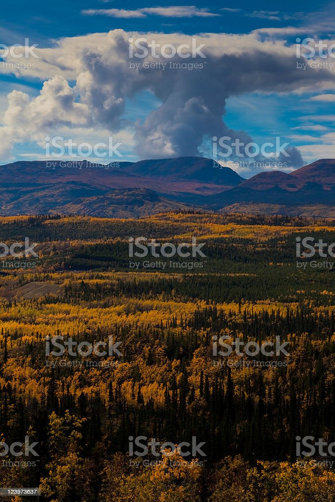Taiga in Fall royalty-free stock photo