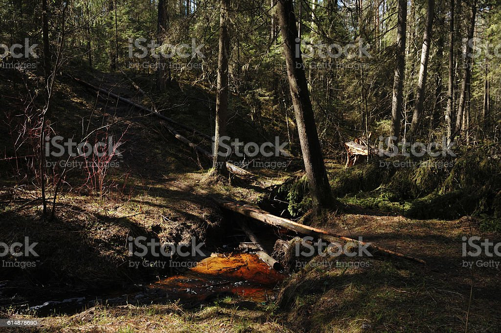 Taiga ravine. stock photo