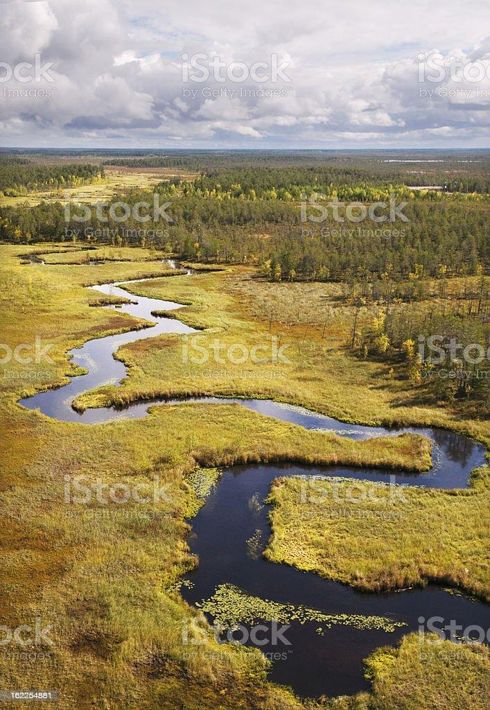 Taiga. Western Siberia royalty-free stock photo