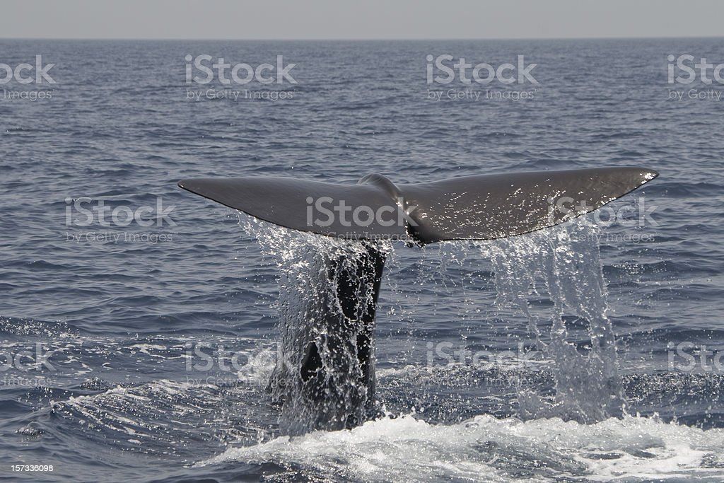 Tail of a whale royalty-free stock photo