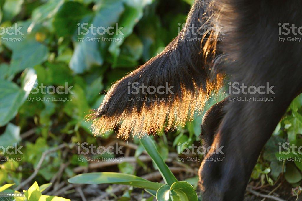 Tail royalty-free stock photo