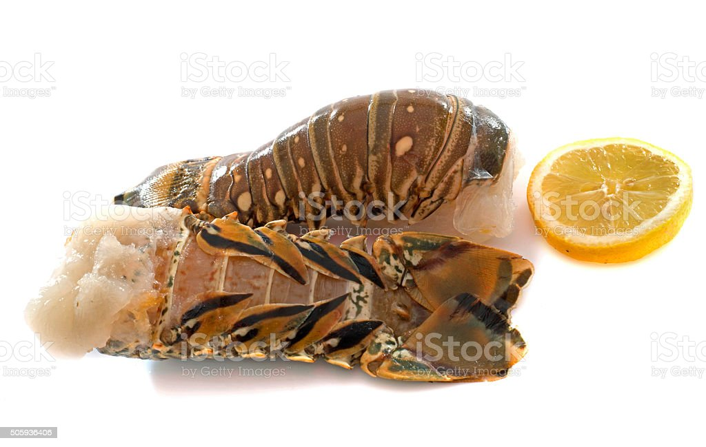 tails of spiny lobster stock photo