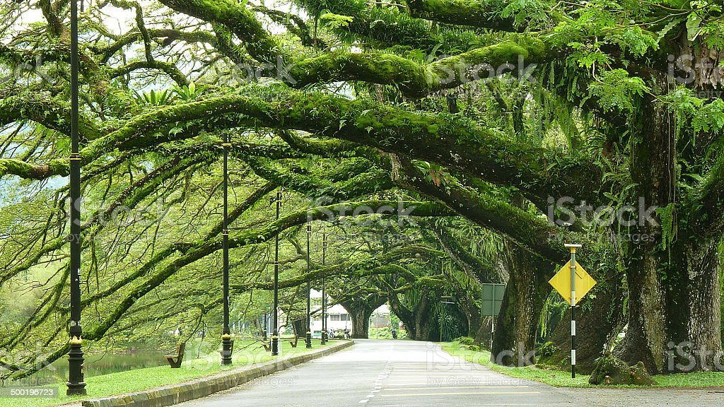 Taiping stock photo