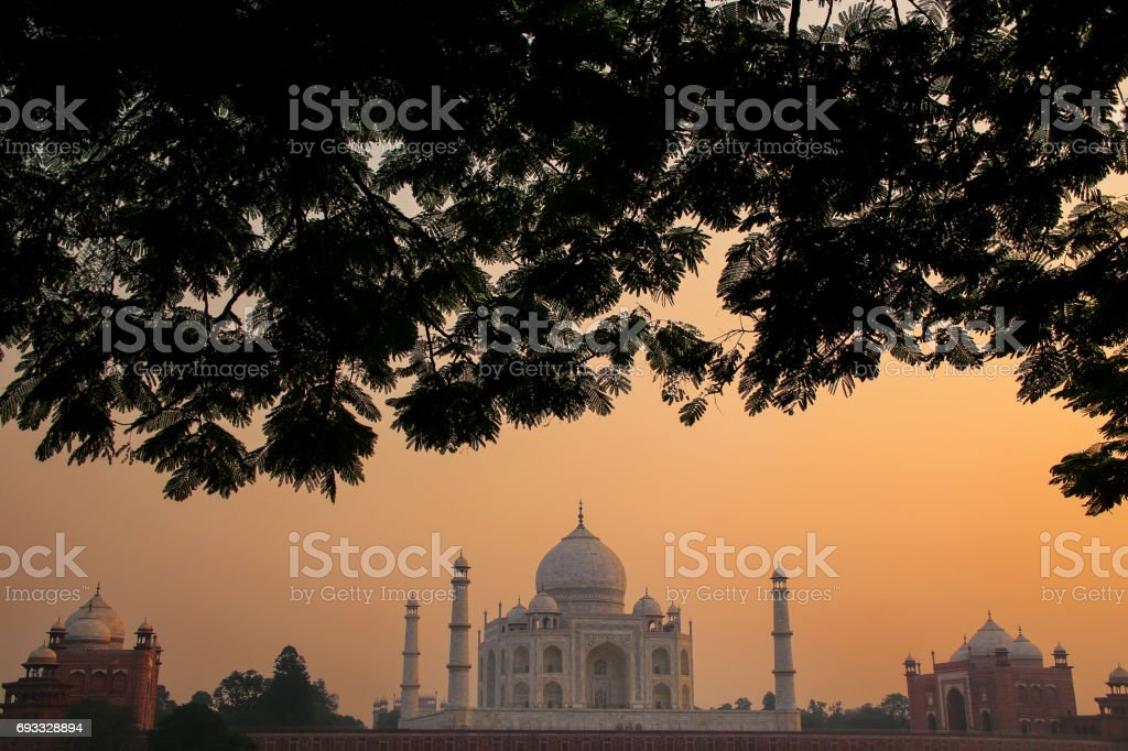 Taj Mahal framed by tree crown at sunset, Agra, India stock photo