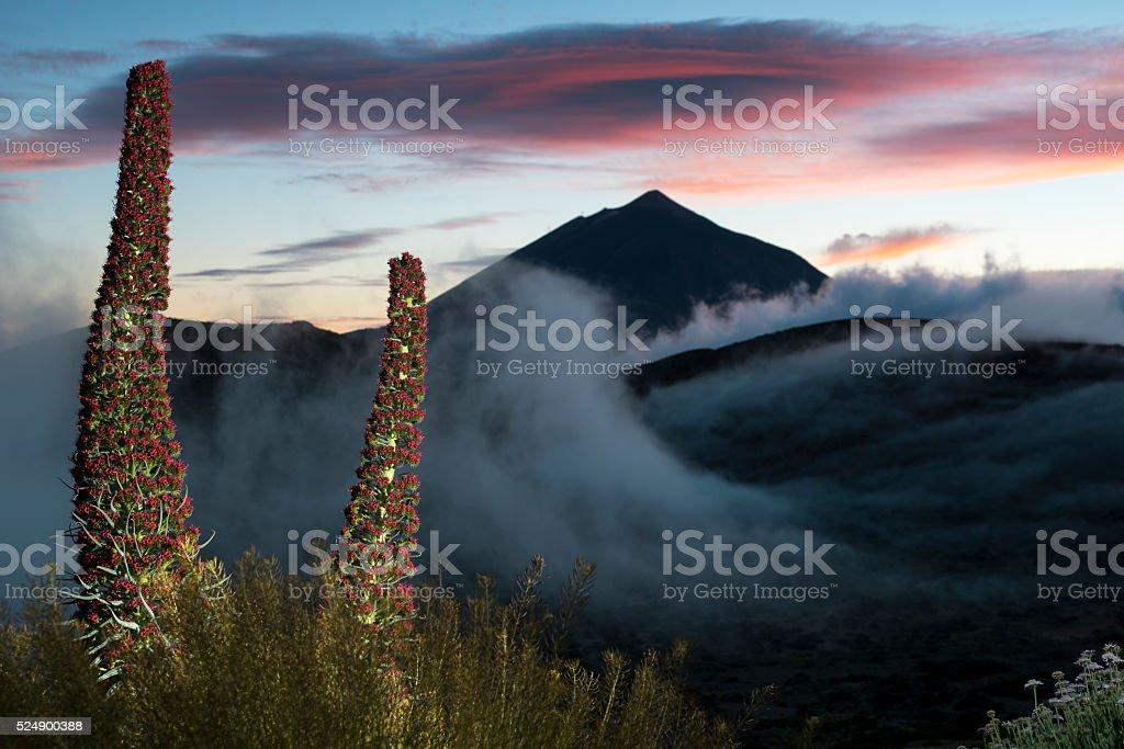 Tajinastes y El Teide stock photo