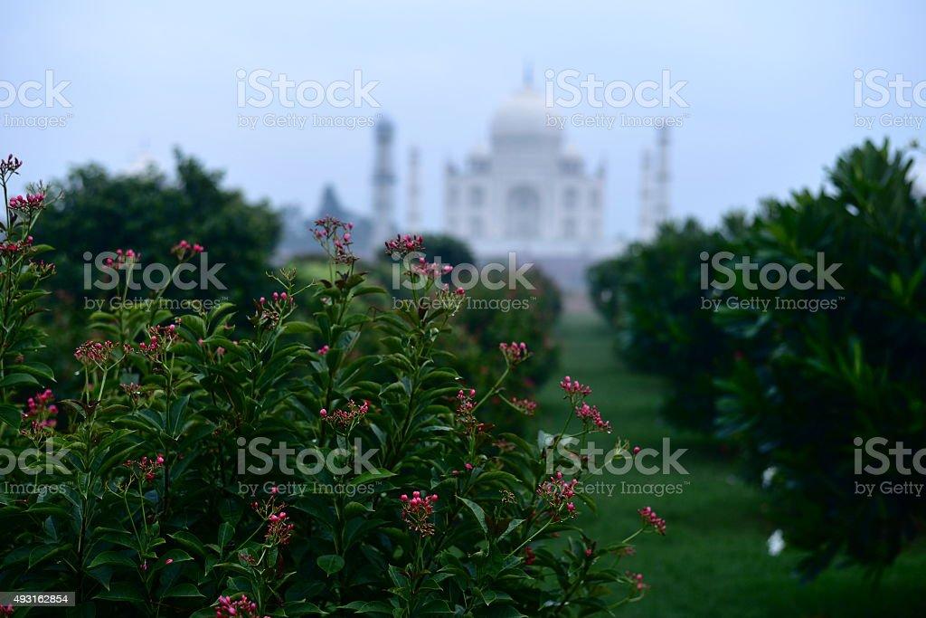 Taj-Mahal mausoleum stock photo