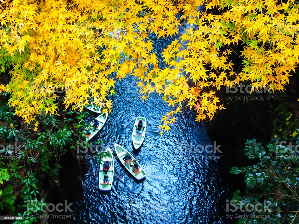 Takachiho Gorge's Yellow leaves stock photo