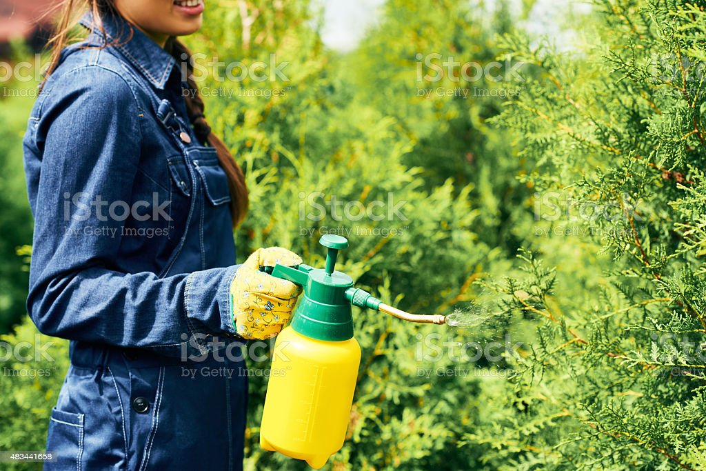 Take care of plants stock photo