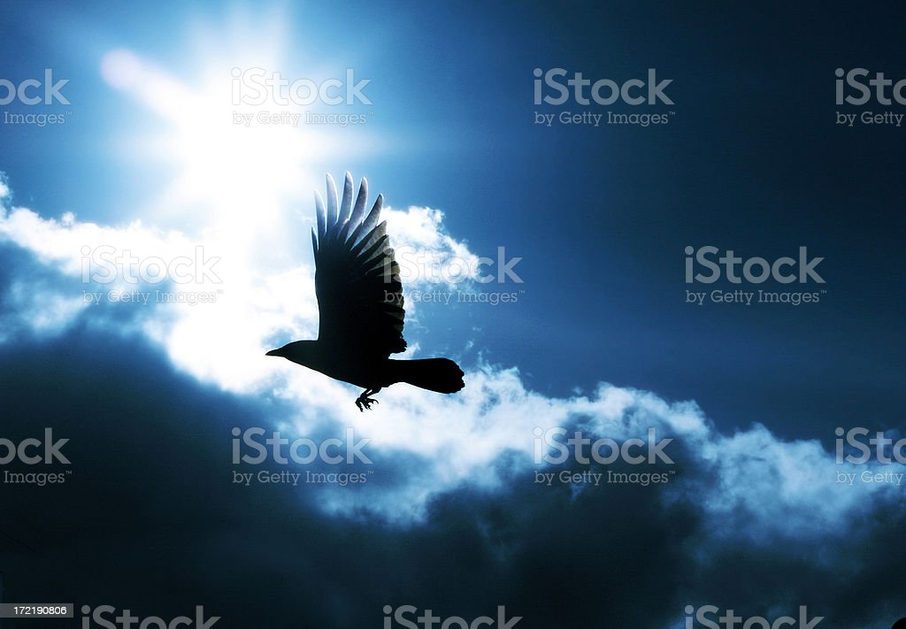 Take Flight - 200,000th file on istockphoto! royalty-free stock photo