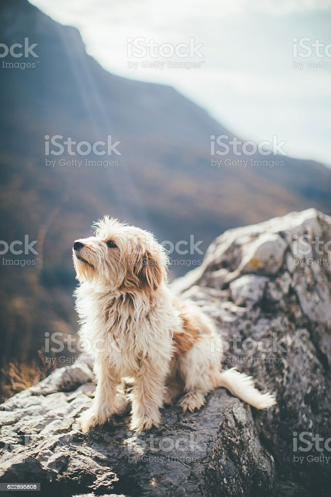 Take me home with you stock photo
