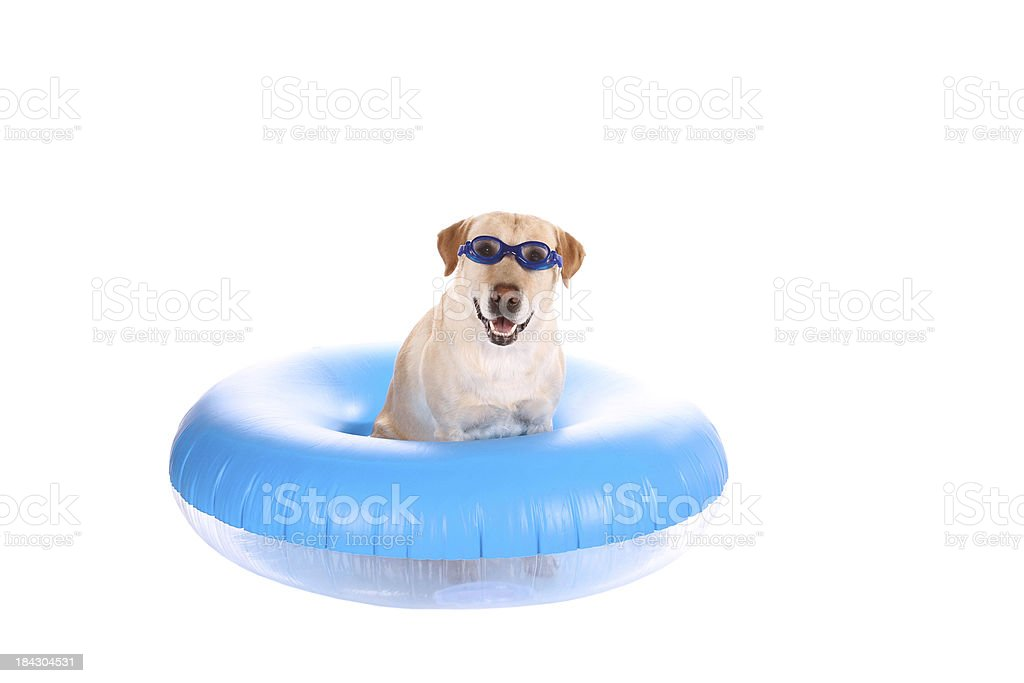 Take Me Swimming stock photo