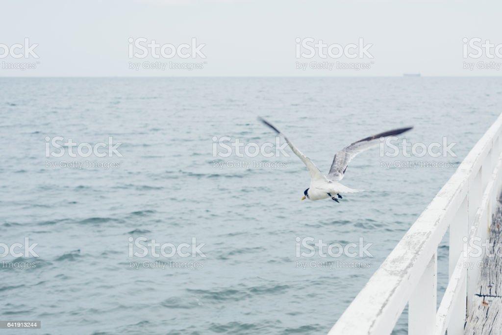 Take off the seagulls stock photo