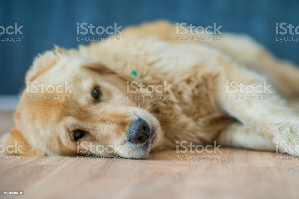 Taking a Dog stock photo