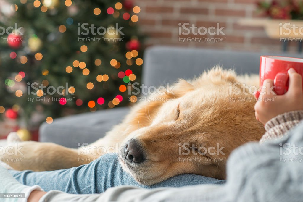 Taking a Nap stock photo