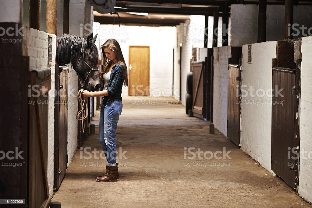 Taking a walk through the stables stock photo