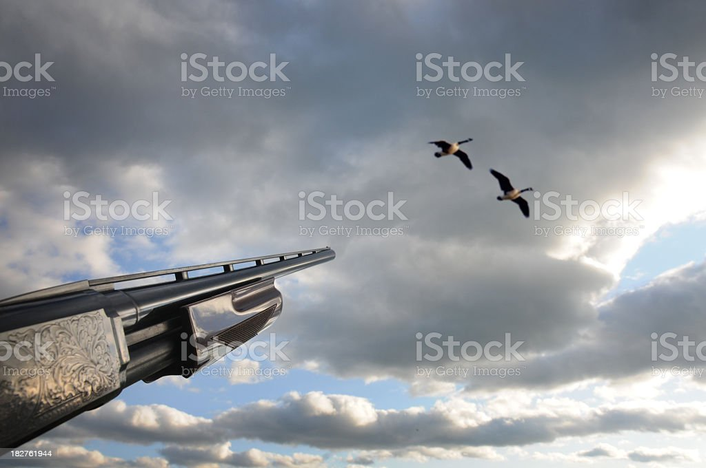 Taking aim at birds in the sky stock photo