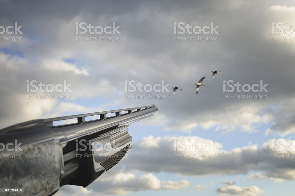 Taking aim at some geese stock photo