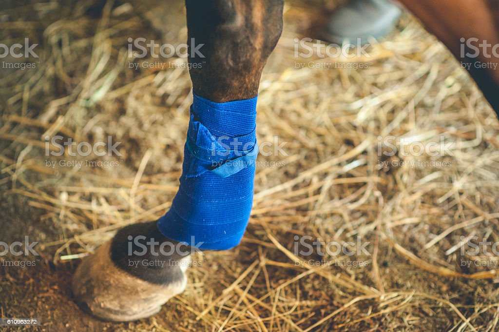 Taking Care of Injured Horse Leg stock photo