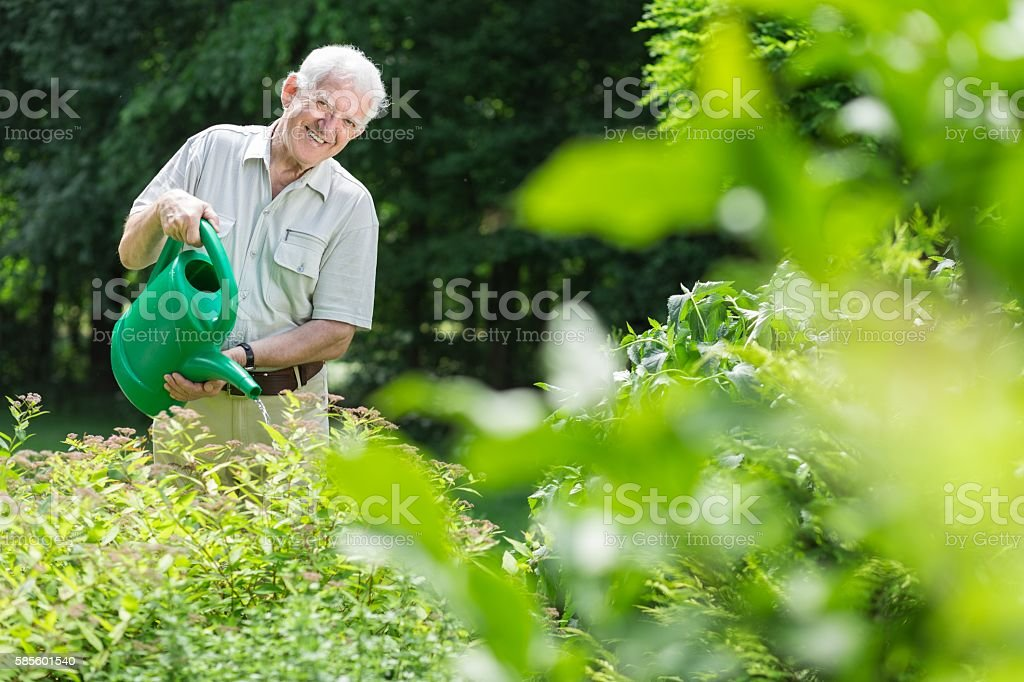 Taking care of the garden stock photo