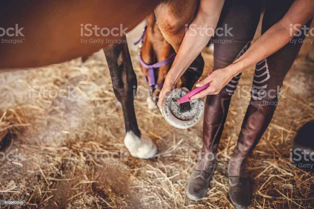 Taking Care of the Horse Hoof stock photo