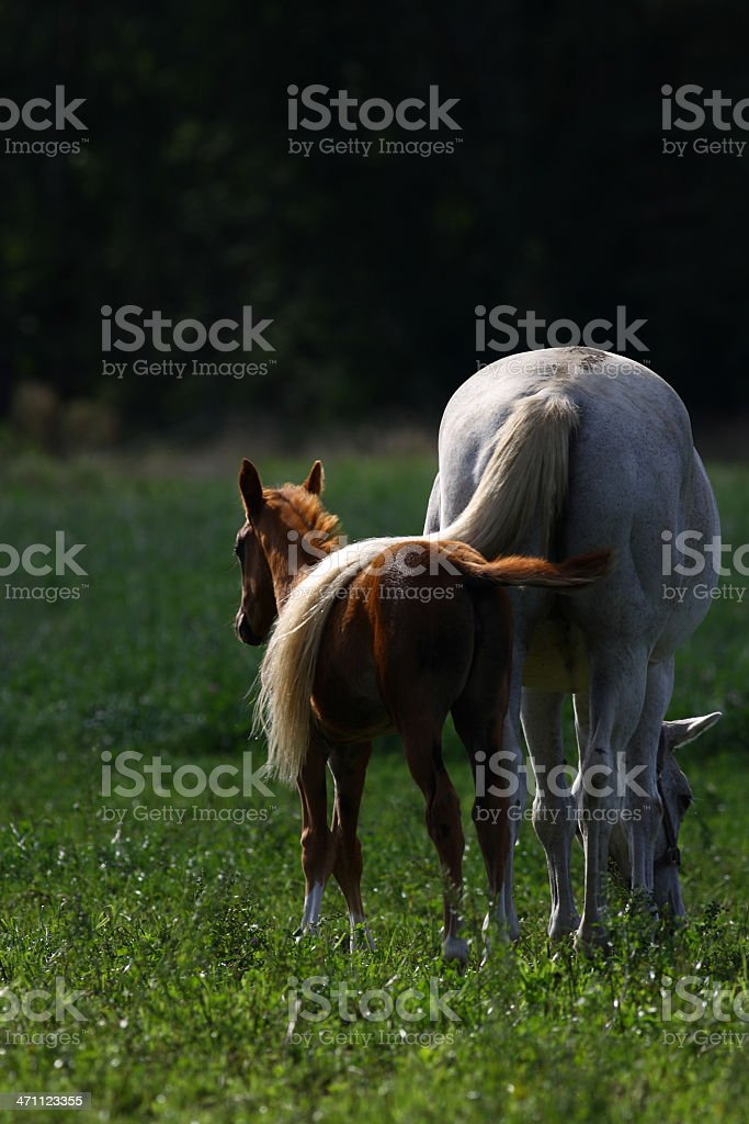 Taking care royalty-free stock photo