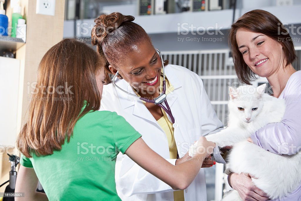 Taking cat to the vet royalty-free stock photo