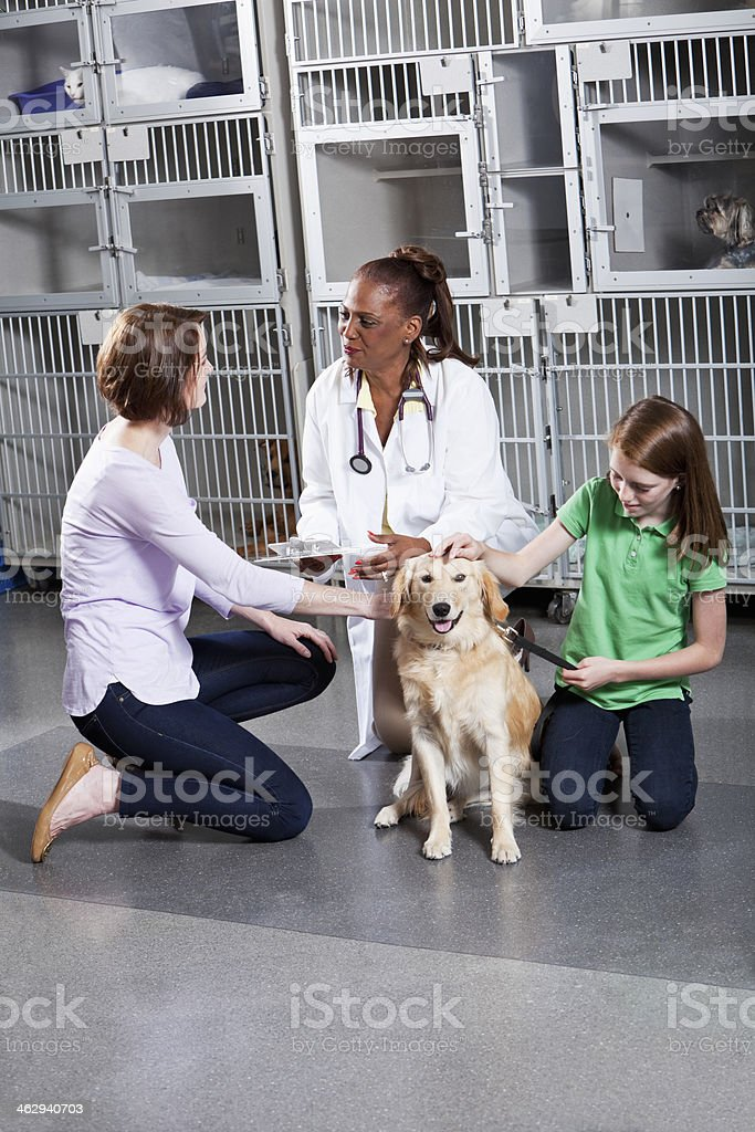 Taking dog to the vet stock photo