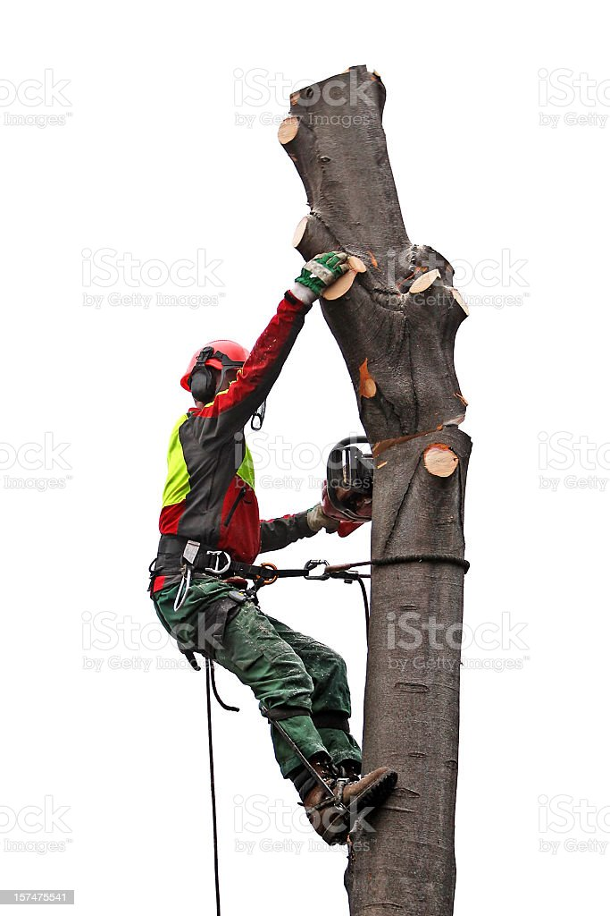 Taking down the tree royalty-free stock photo
