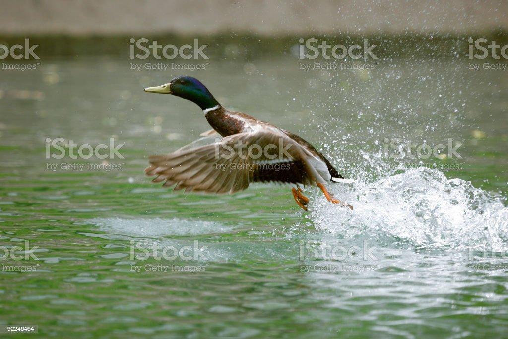 Taking off stock photo