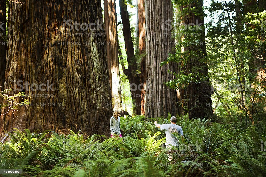Taking photos in the redwoods stock photo