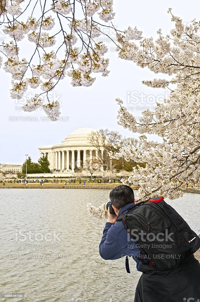 Taking pictures at the Cherry blossom festival in Washington, DC royalty-free stock photo