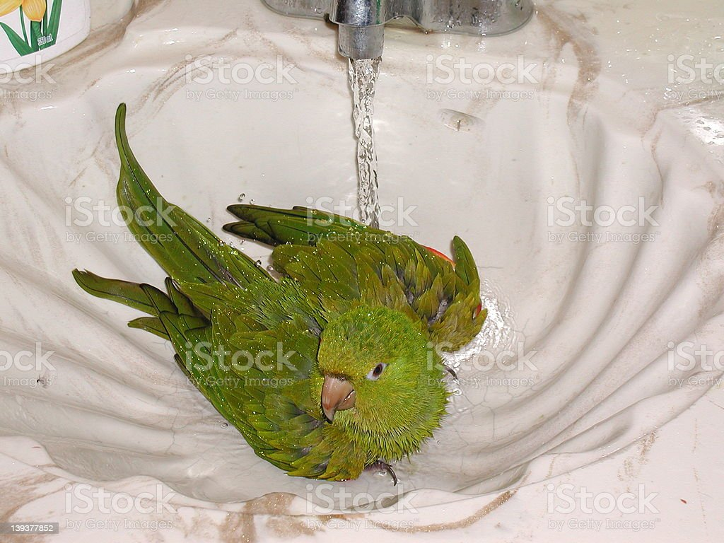 taking shower royalty-free stock photo