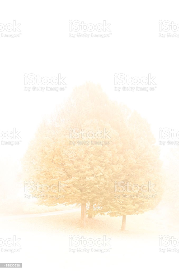 Tale of winter stock photo
