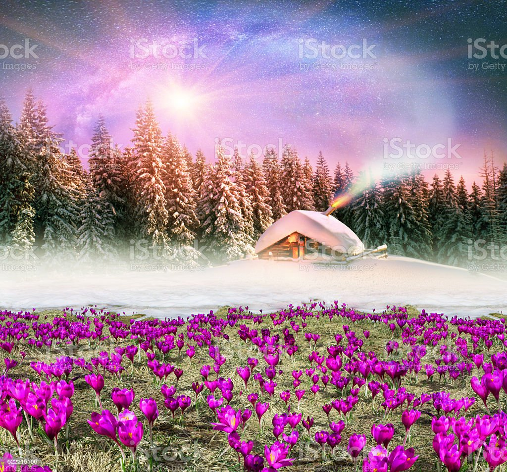 Tale with crocuses stock photo