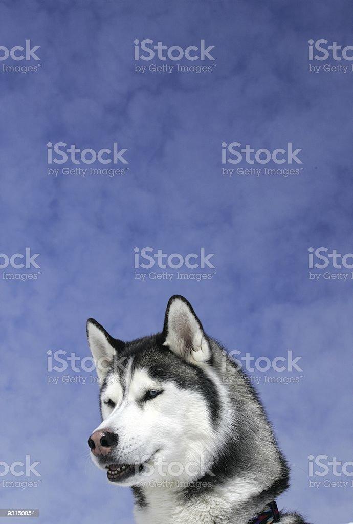 talking dog royalty-free stock photo