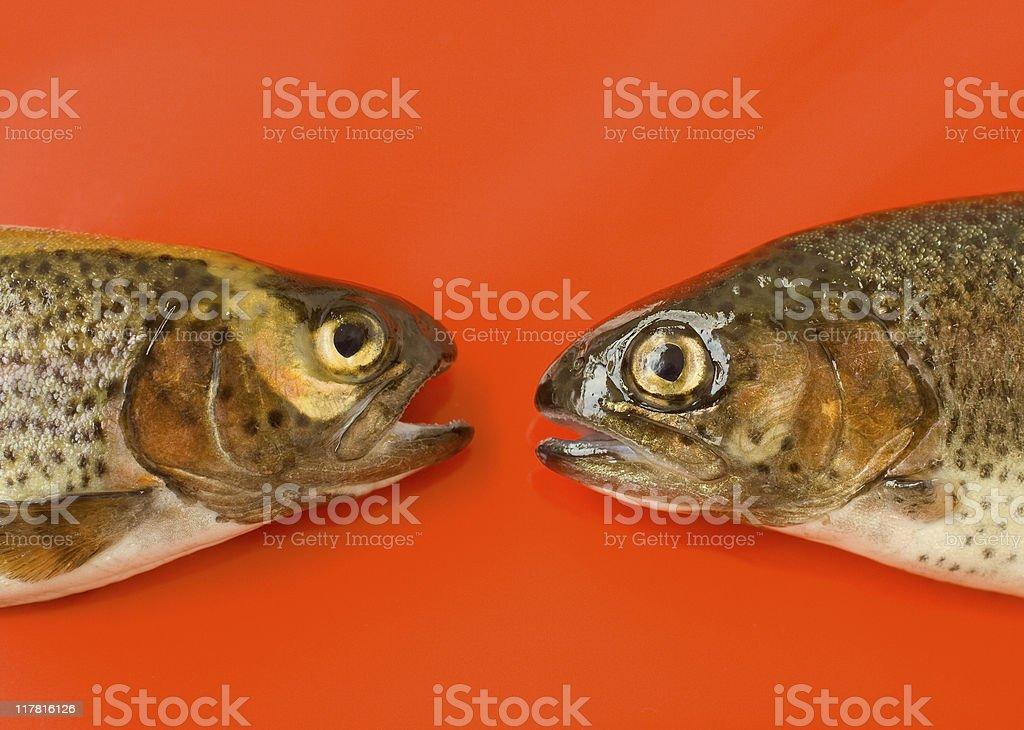 Talking Fish royalty-free stock photo