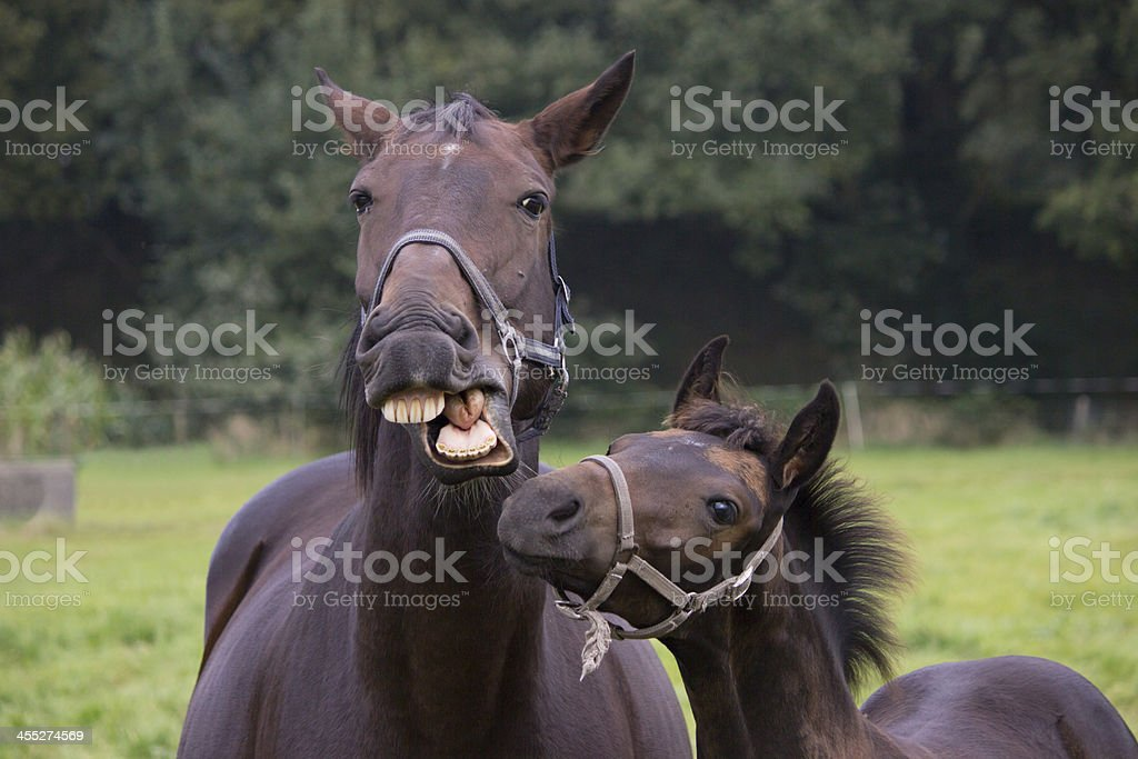 Talking horse mother with young foal stock photo